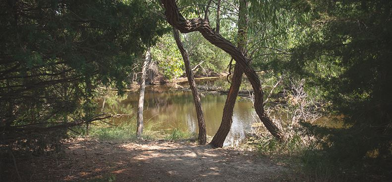 Howard Reynolds Nature Trail