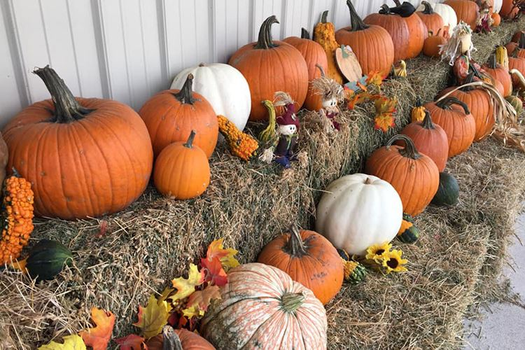 4 Find the perfect pumpkin